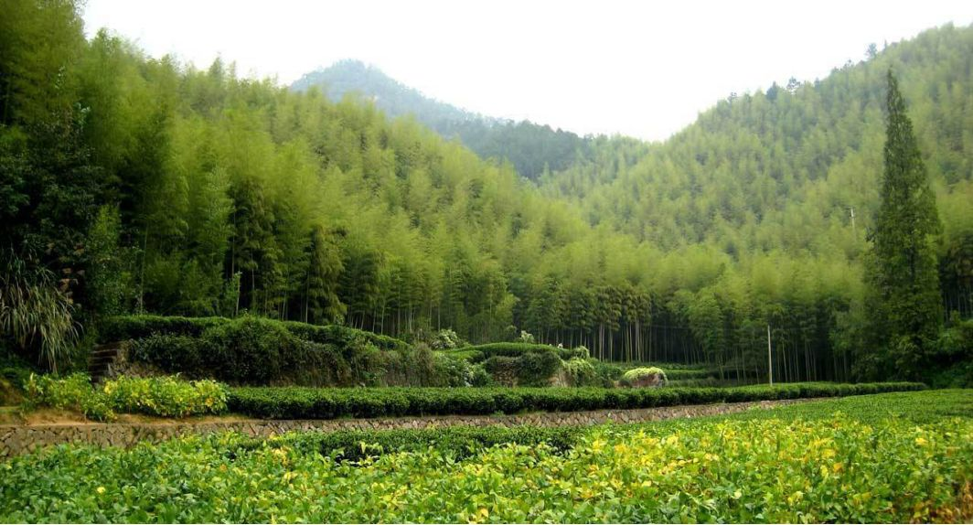 裸心谷設計理念-桂林智慧旅游規劃設計有限公司